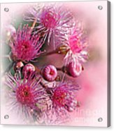 Delicate Buds And Blossoms Acrylic Print