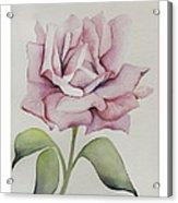Delicate Dance Acrylic Print by Nancy Edwards