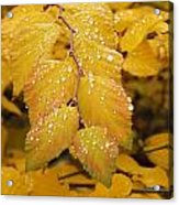 Delicate Droplets Acrylic Print