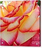 Delicate Edges Acrylic Print