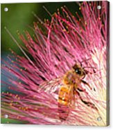 Delicate Embrace - Bee And Mimosa Acrylic Print