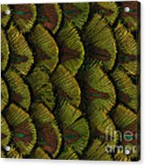 Delicate Feather Acrylic Print