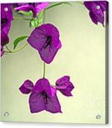 Delicate Flowers Pretty In Pink Acrylic Print by Natalie Kinnear