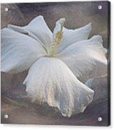 Delicate Hibiscus Acrylic Print