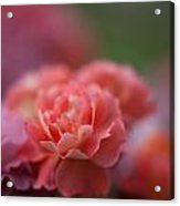 Delicate Layers Of Light Acrylic Print