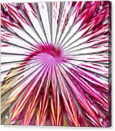 Delicate Orchid Blossom - Abstract Acrylic Print
