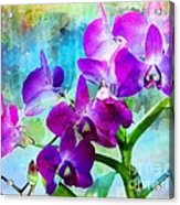 Delicate Orchids Acrylic Print