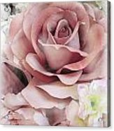 Delicate Rose Acrylic Print