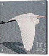 Delicate Wings In Flight Acrylic Print