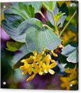 Delicate Yellow Flowers Acrylic Print