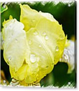 Delicate Yellow Wildflower Acrylic Print