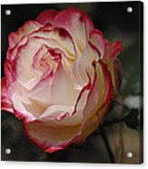 Delicately Yours  Acrylic Print