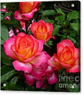 Delicious Summer Roses Acrylic Print