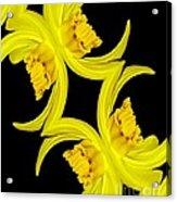 Delightful Daffodil Abstract Acrylic Print
