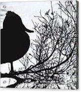 Delightful Duck Acrylic Print
