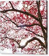 Delightful Fall Acrylic Print