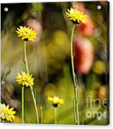 Delightful Florets Acrylic Print
