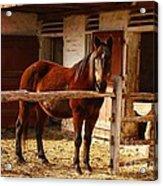 Delightful Horse Acrylic Print