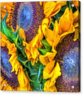 Delightfully Sunny Acrylic Print
