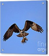 Delivery By Air Acrylic Print