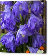 Delphinium And Butterfly Acrylic Print