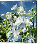 Delphinium Sky Original Acrylic Print