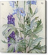 Delphiniums Acrylic Print by James Valentine Jelley