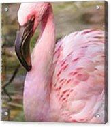 Demure Flamingo - Digital Art Acrylic Print