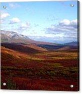 Denali In The Autumn Acrylic Print