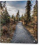 Denali Path Acrylic Print