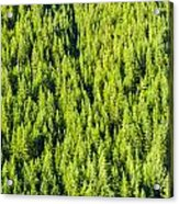 Dense Forest Acrylic Print