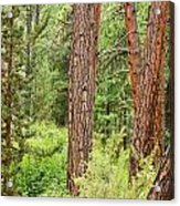 Dense Forest View Acrylic Print