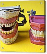 Dental Models Acrylic Print by Garry Gay