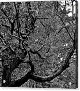 Denver Tree Fx Acrylic Print