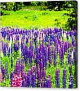 Depth Of Color Acrylic Print