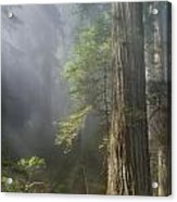 Depth Of Forest Acrylic Print