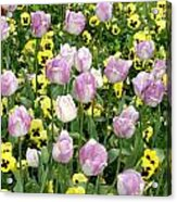 Descanso Gardens 3 Acrylic Print