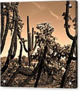 Desert At Dusk Acrylic Print