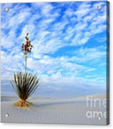 Desert Beauty White Sands New Mexico Acrylic Print