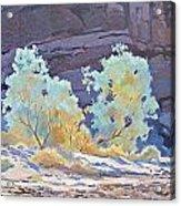 Desert Contrasts Acrylic Print