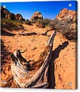 Desert Driftwood Acrylic Print