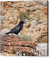 Jet Black Desert Dweller Acrylic Print