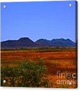 Desert Field Acrylic Print by Rebecca Christine Cardenas
