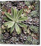 Desert Flora Acrylic Print