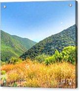 Desert Greens And Yellows Acrylic Print