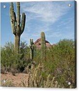 Desert Landscape With Saguaro Acrylic Print