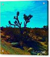 Desert Life  Acrylic Print