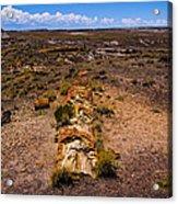 Desert Log Acrylic Print