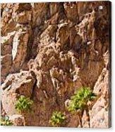 Desert Mountain Acrylic Print
