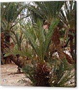 Desert Oase Camp Sinai Egypt Acrylic Print